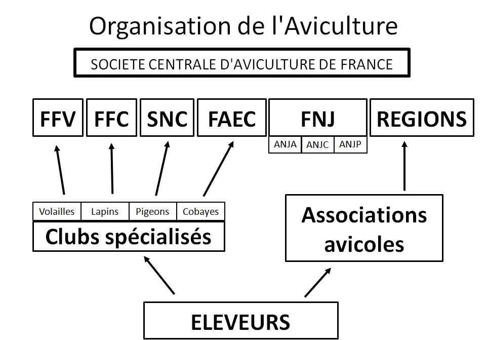 Organisation de l'aviculture