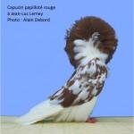 2011 Capucin