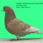 2011 Tambour altenbourg