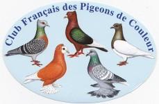 Logo pigeons couleur