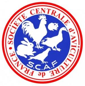 logo scaf