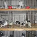 Marché avicole de Straubing