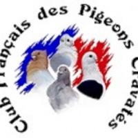 Saison 2018 du Club Français des pigeons Cravatés