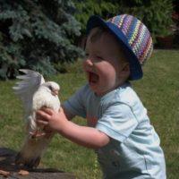 Promotion de la colombiculture