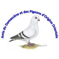 Nouvelles des Amis du Damascène et des Pigeons d'Origine Orientale